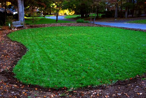 Green green lawn 335 x 500