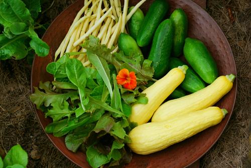 Harvest dinner 500