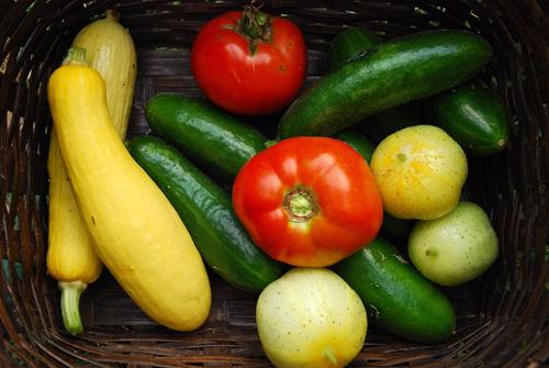 Mix veggie bounty 500