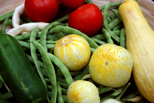 Seven pound harvest-500