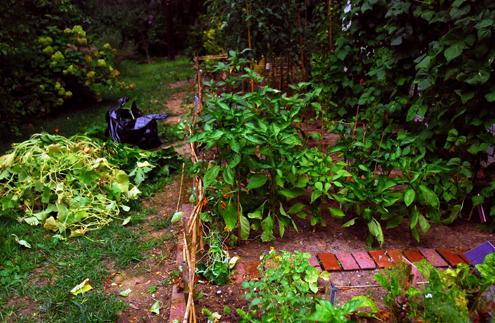 Garden removal 500