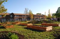 0805274gorilla_garden